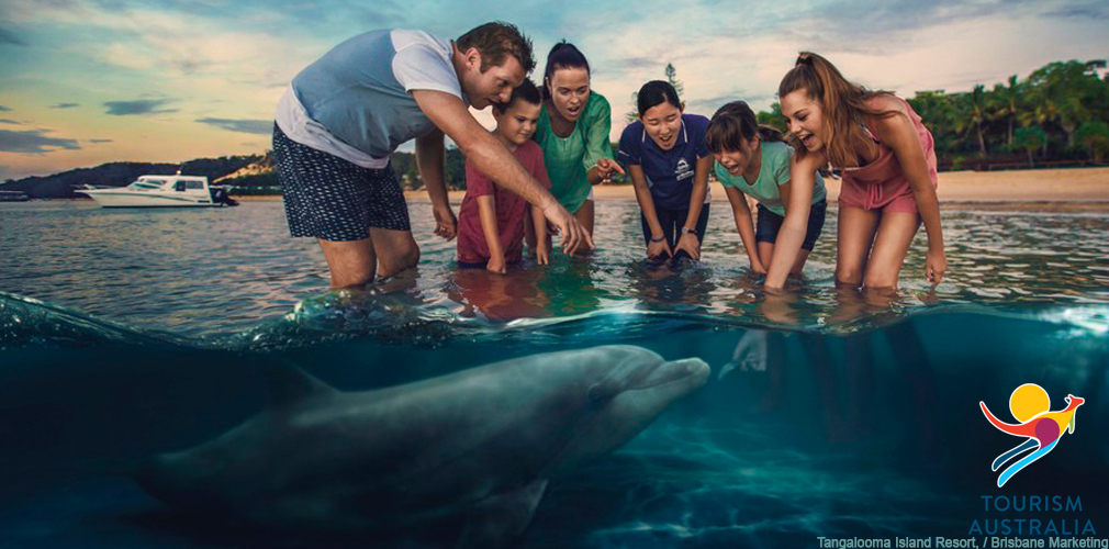 Wild Dolphin Feeding at Tangalooma Island Resort, Moreton Island, QLD Brisbane Marketing
